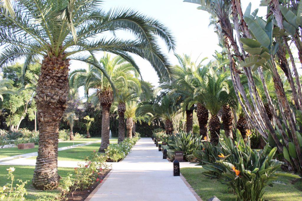 rabat-voyage-sofitel-jardin-des-roses-piscine-2