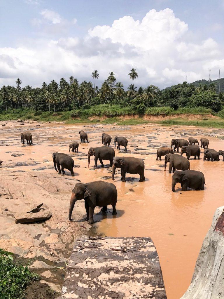 guide-voyage-sri-lanka-Anuradhapura-day1-4