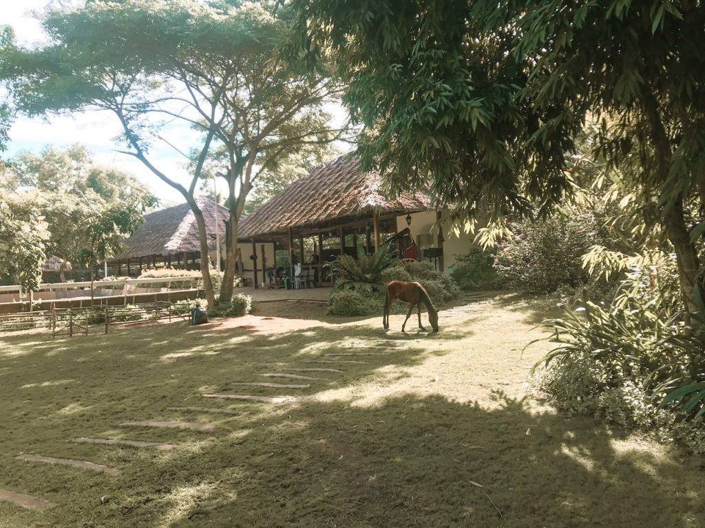 donatela-hotel-panglao-philippines-guide-voyages-tips-bohol-9