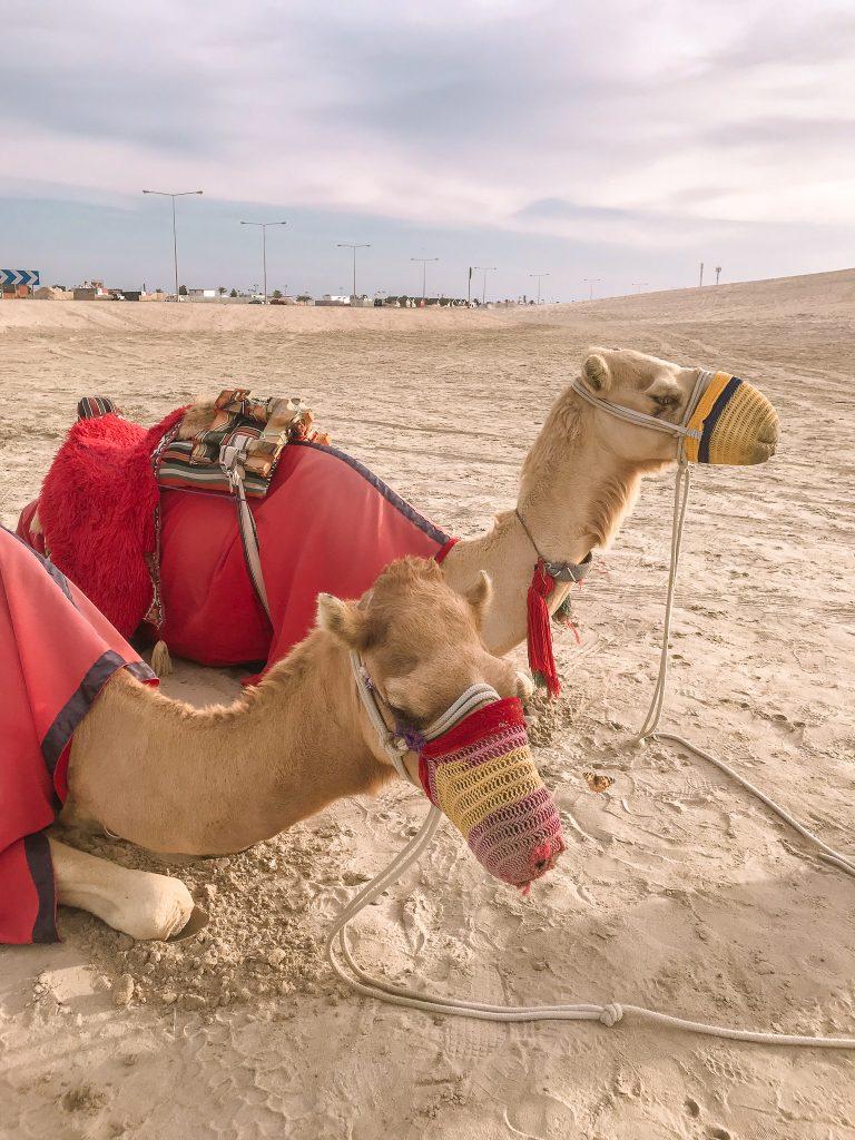 visit-qatar-doha-city-guide-voyage-tips15
